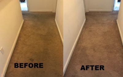 Carpet Steam Cleaning in New Jersey